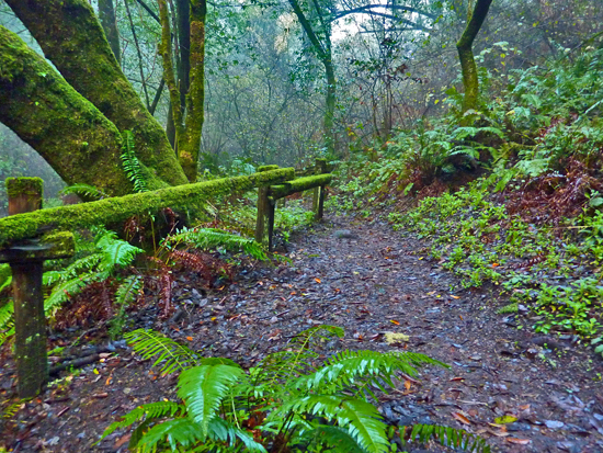 The Woodpecker Trail leads through diverse ecosystems