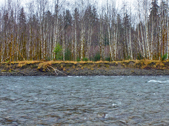 River terrace along the Bogachiel River in Olympic NP